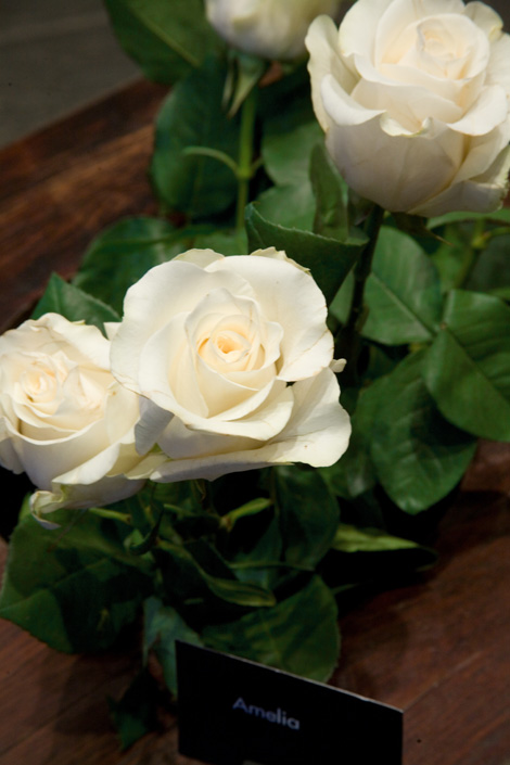rose_bianche