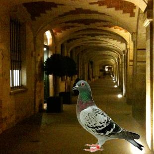 pigeon_piccione_ambroisie_glass_bottC