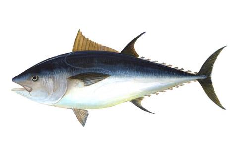 capelli-marea-nera-louisiana-tonno-rosso