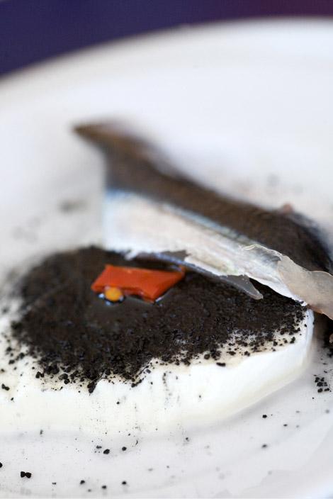 cracco-paestum-mozzarella-acciuga-piatto