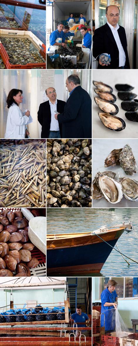 gennaro-esposito-fornitori-irsvem-molluschi