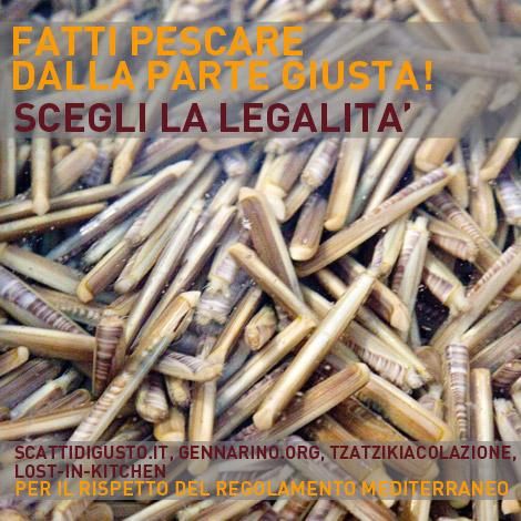 campagna-pesca-legale-regolamento-mediterraneo-01
