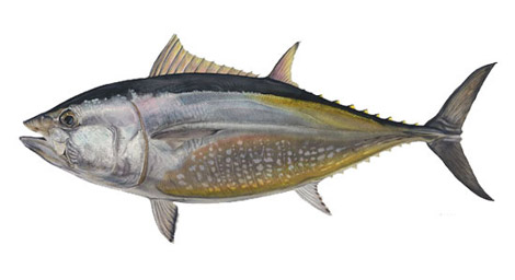 tonno-catture
