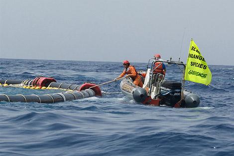 tonno-greenpeace