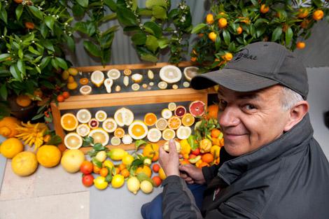 Dove comprare frutta surgelata