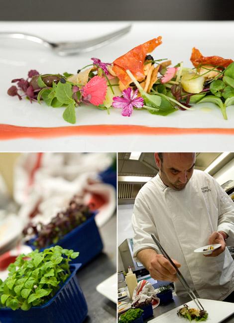 gionata-rossi-ristorante-viareggio-insalata