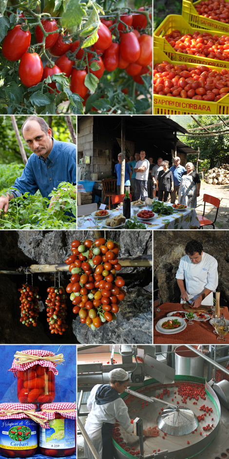 disfida-pomodoro-vincenzo-corbarini