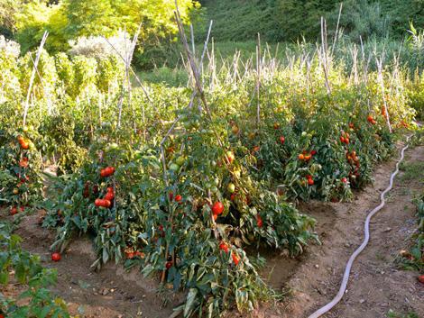 eventi e inviti roma disfida del pomodoro lettera dall