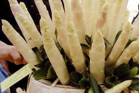 Asparago-Badoere