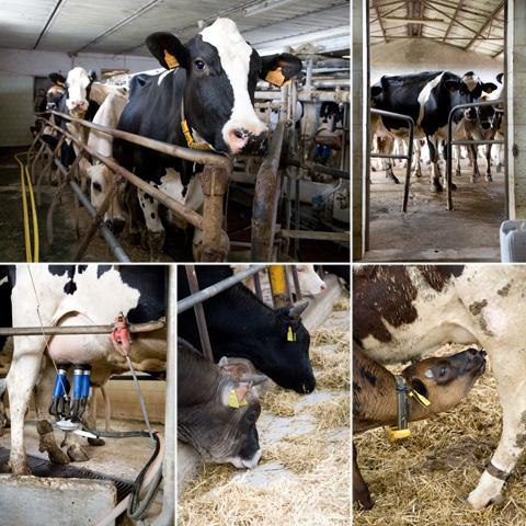 biola-filiera-latte
