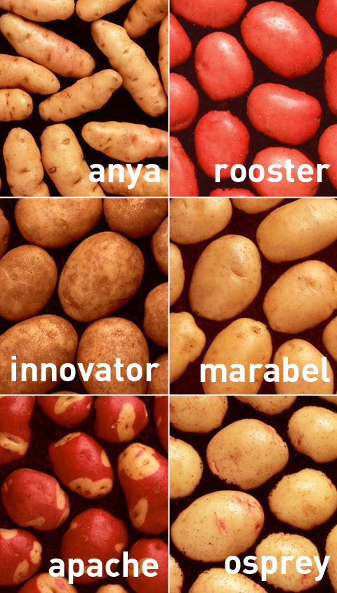 patate-tipi