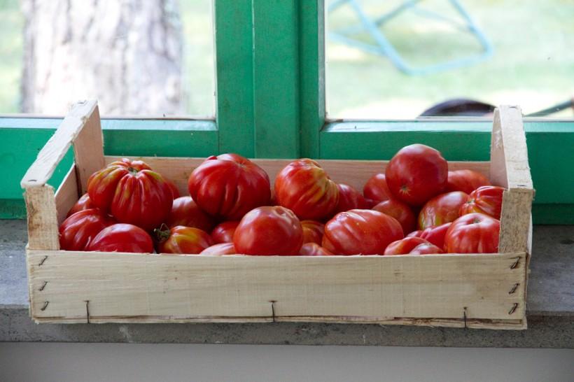 pomodori-cassetta-alla-disfida-della-pasta-a-cittaducale
