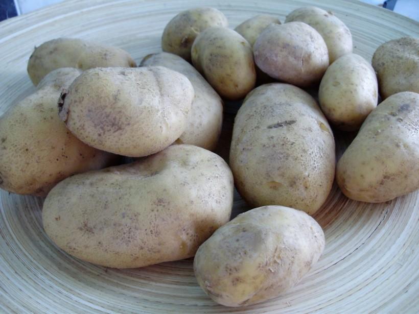 patate-La-Spunta-Casone-Pitigliano-Franci-Pagano