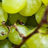 10 vini naturali definitivi perchè dopo Nossiter tutto sarà come prima