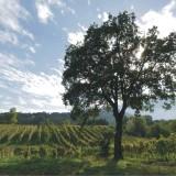 Schede del vino. Fiano di Avellino Docg 2008 Guido Marsella: 4 scatti