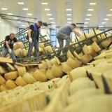 Sciacallaggio. Attenti nell'aiuto a Parmigiano e Grana del terremoto
