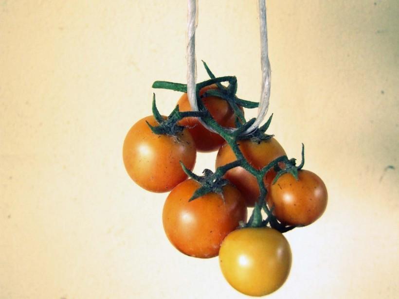 come-fare-i-pomodori-appesi-02