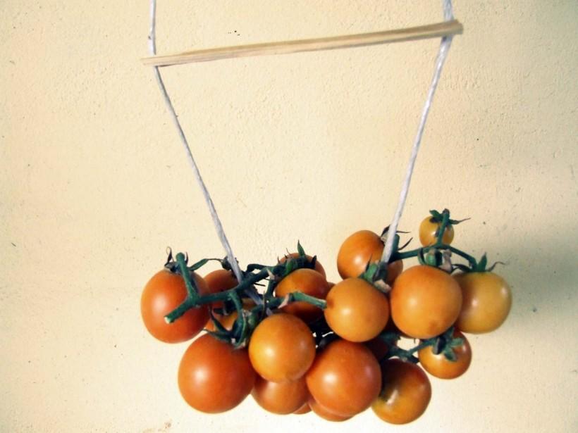come-fare-i-pomodori-appesi-03