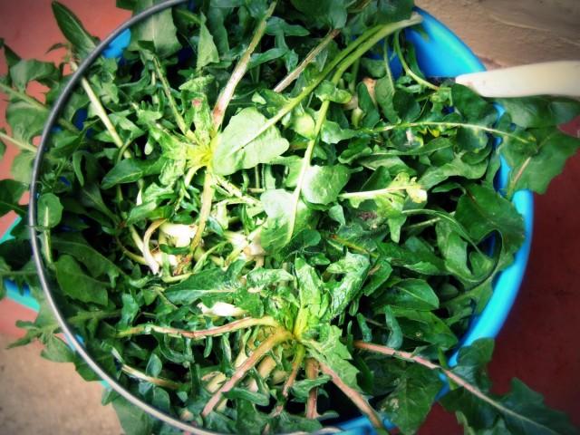 amatissime protagoniste della cucina contadina le erbe spontanee