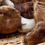 Funghi. Chi vince la classifica dei 5 migliori piatti tra ovuli e porcini