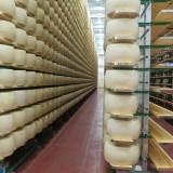 Parmigiano Reggiano. Dopo il terremoto, le forme sono in una nuova casa antisismica