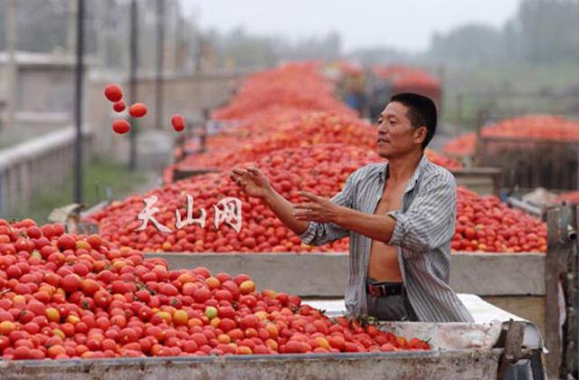 pomodoro cinese