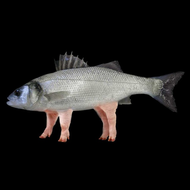 pesce-maiale-q