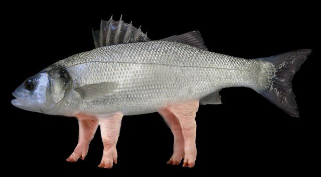 pesce maiale