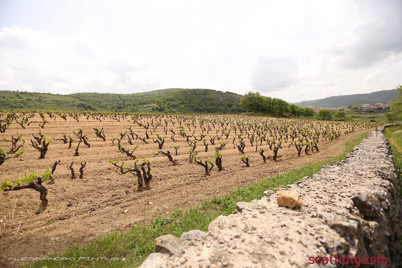 vigneti-Cannonau-Sardegna-Montisci