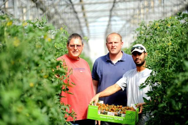 pomodori israele