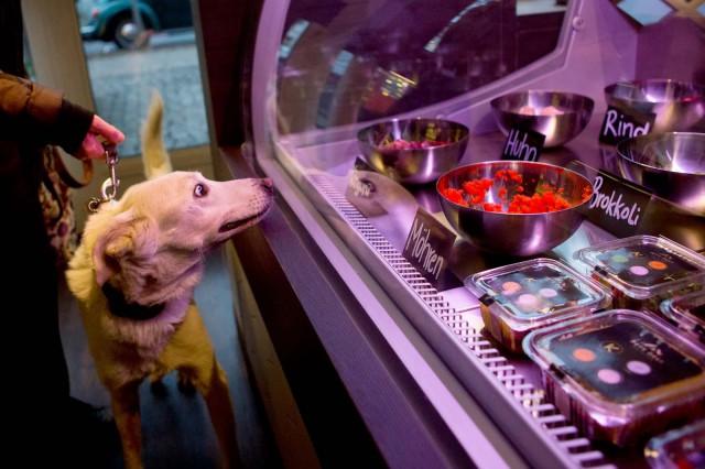 Ristorante gourmet cani