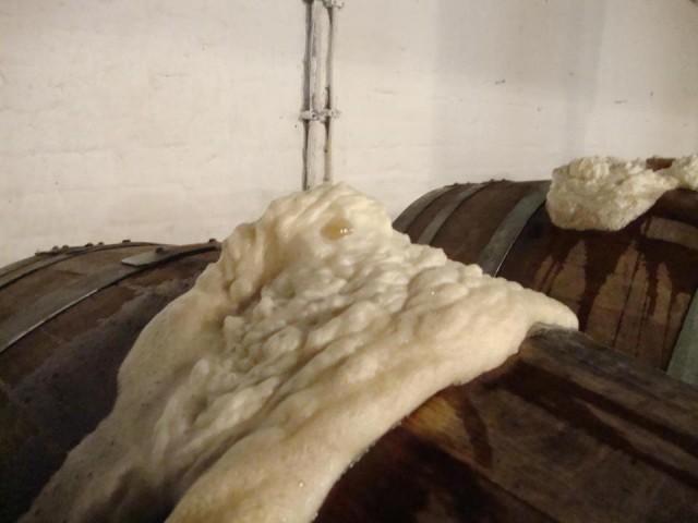 fermentazione spontanea birra