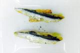 La ricetta perfetta dello chef: alici marinate dalla scuola di Niko Romito
