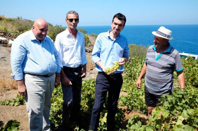 Pantelleria vite alberello