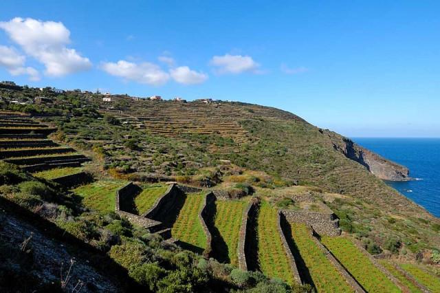pantelleria vite paesaggio a terrazze