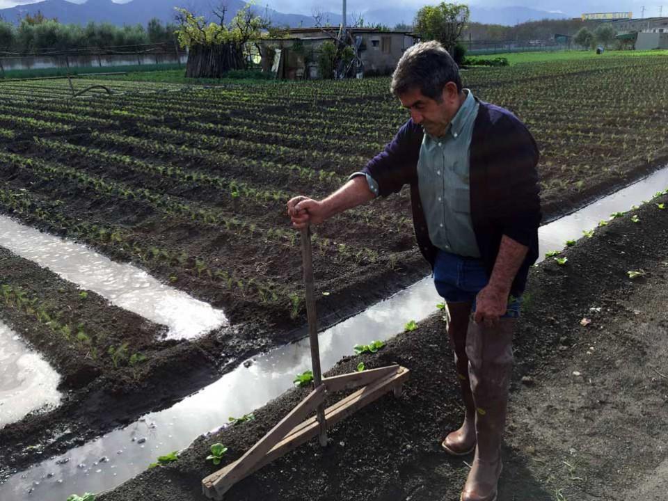pomodoro San Marzano coltivazione