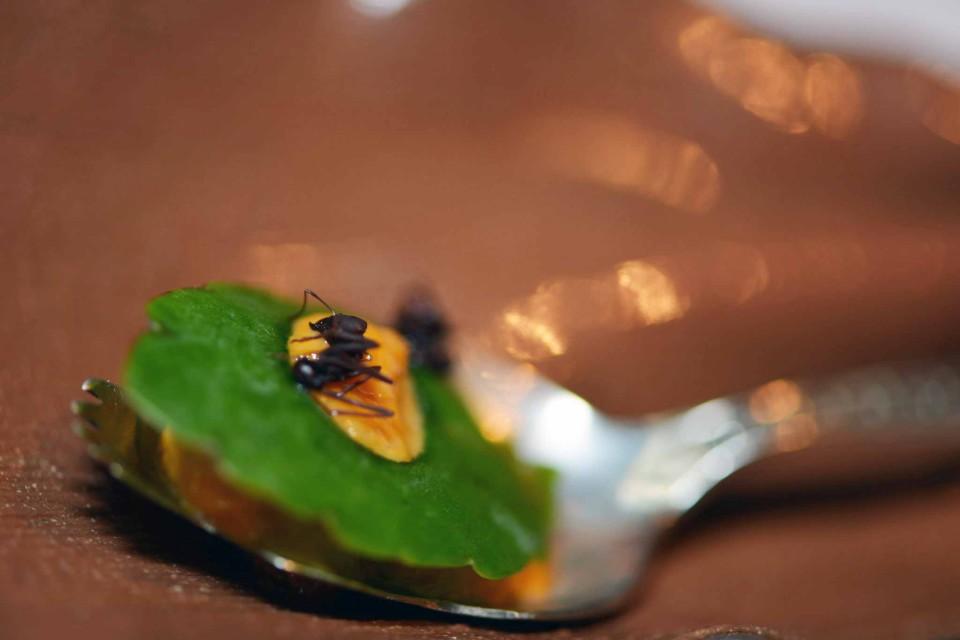 formiche amazzoniche