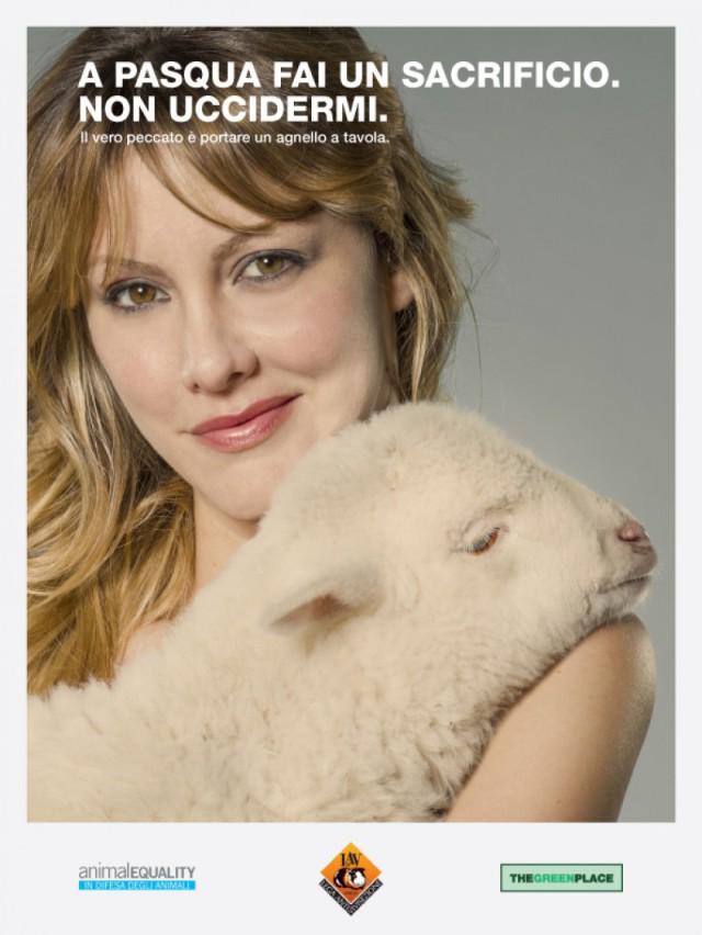 campagna agnello
