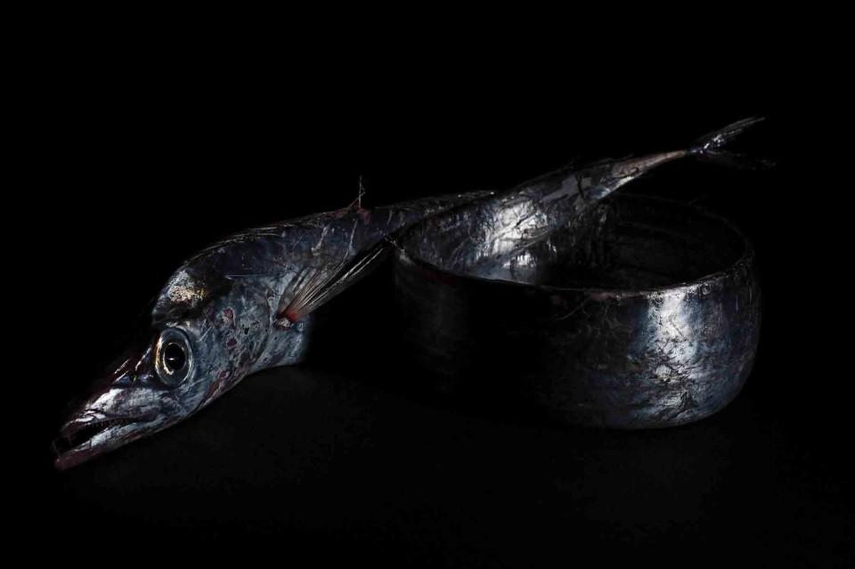 pesce bandiera Salvo d'Avila