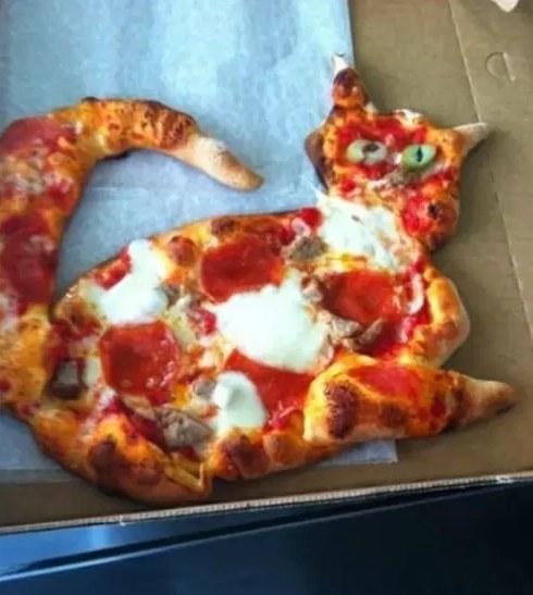 pizza e gattini