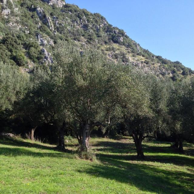 Olivi Cilento