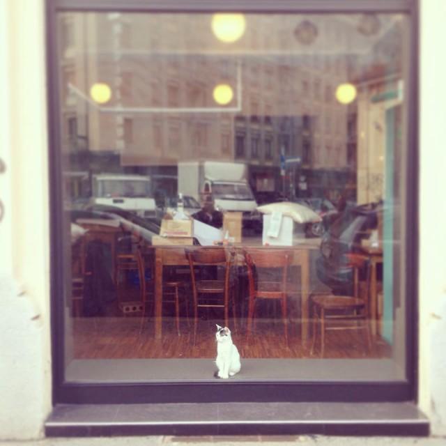 gatto in vetrina