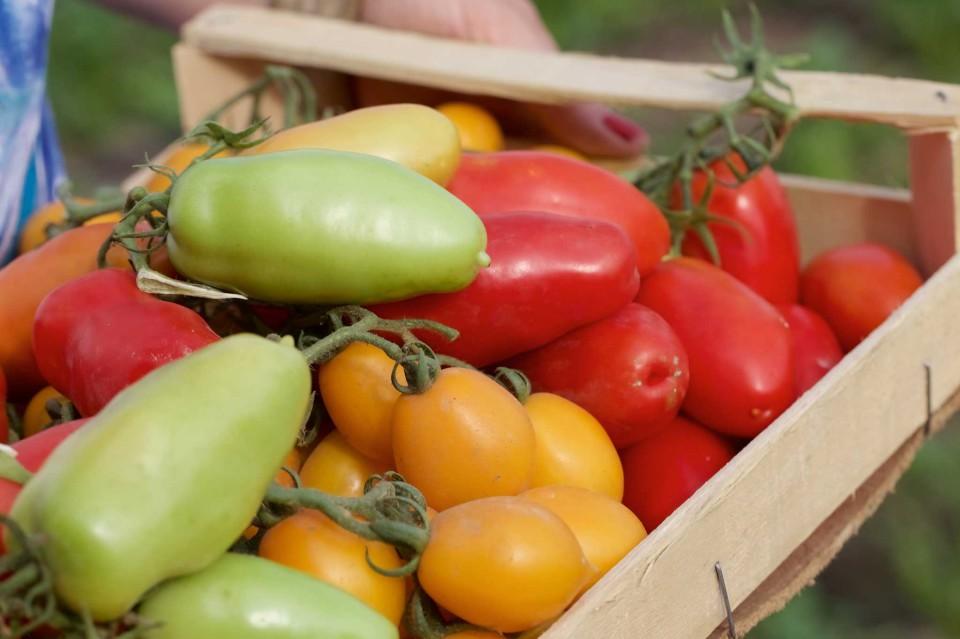 pomodori in cassetta