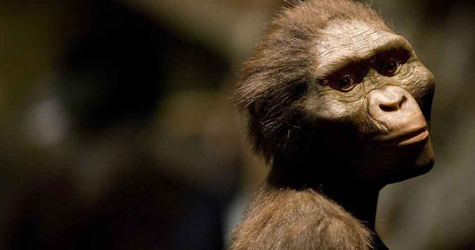 Lucy australopiteco