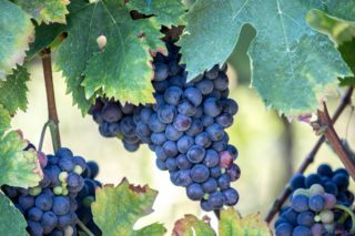 Sorgente del Vino Live 2017: appunti su leggi e vini da assaggiare