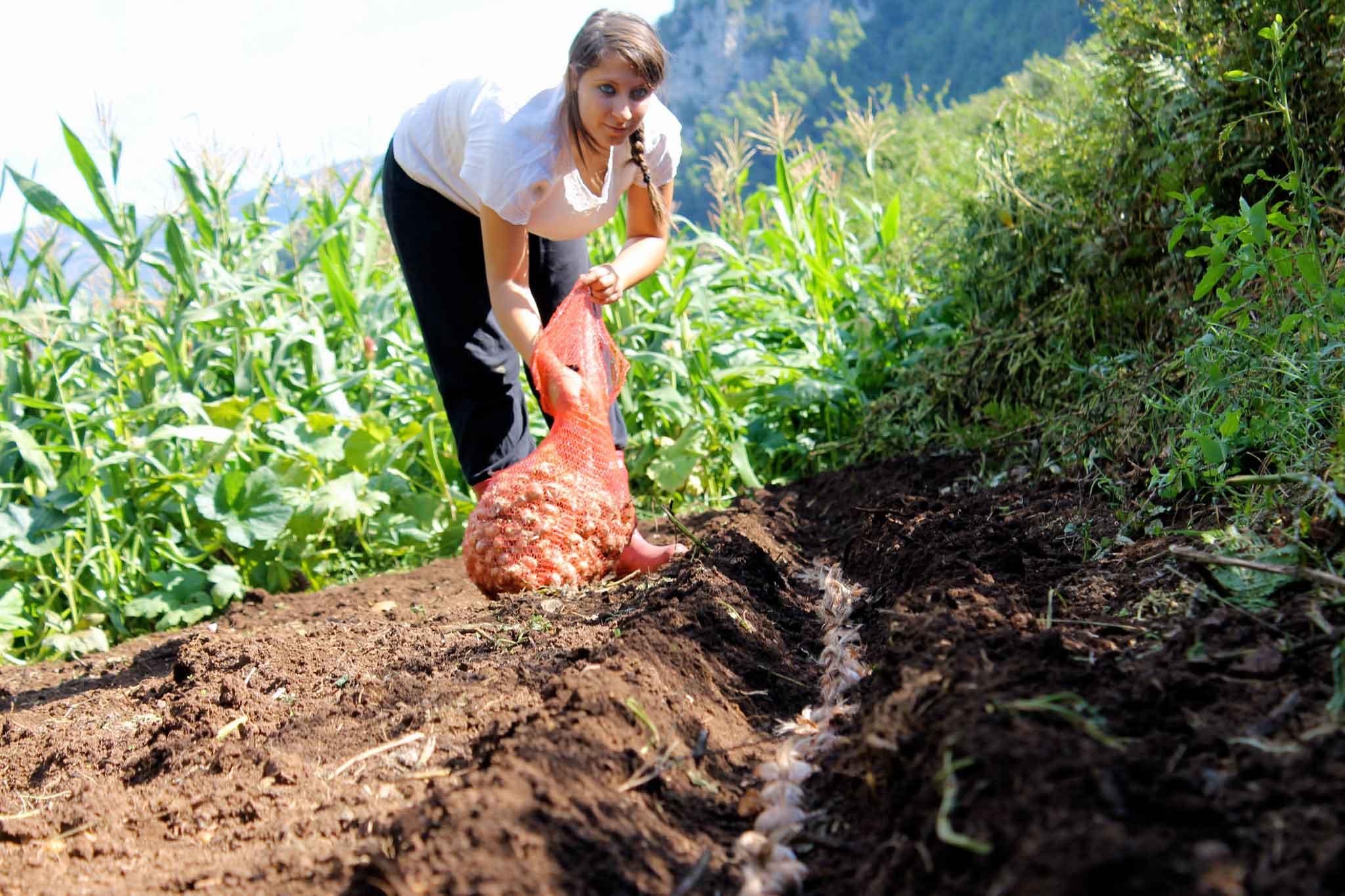 coltivazione zafferano
