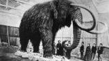 Bufale. Non era di Mammut la carne servita alla cena degli esploratori