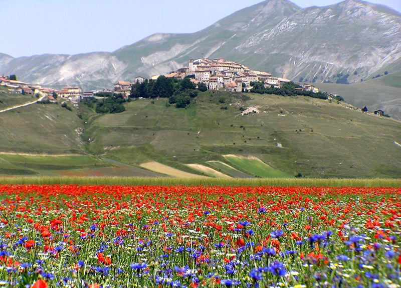 prati fioriti Castelluccio di Norcia