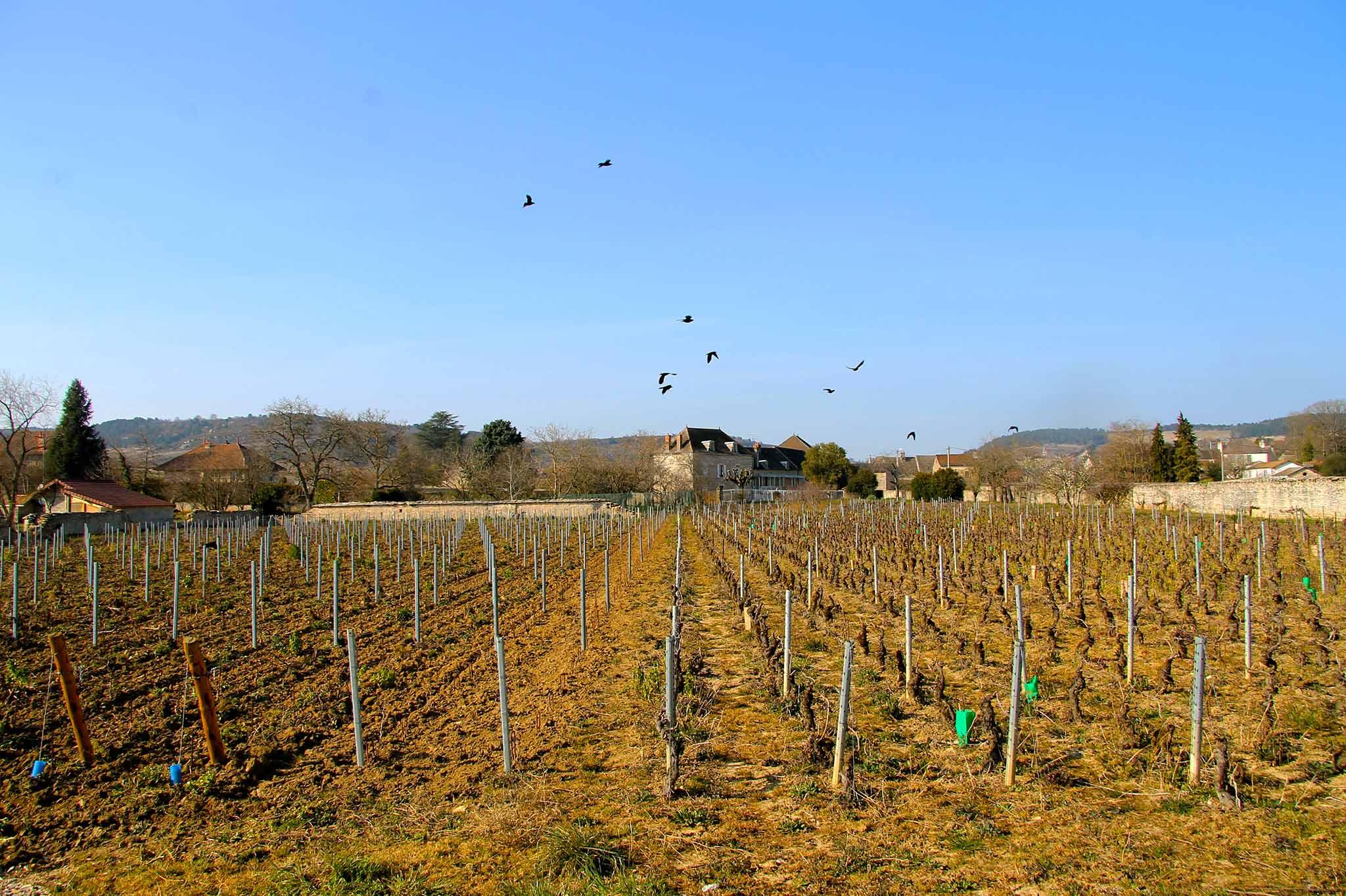 Vigne Beaune