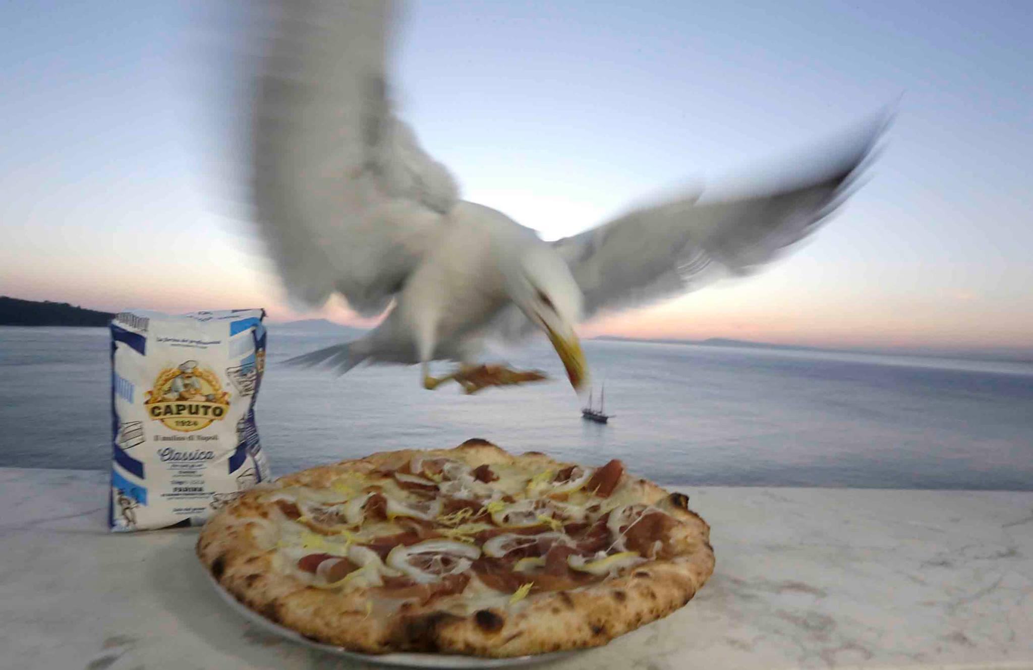 pizza estate mare gabbiano Caputo